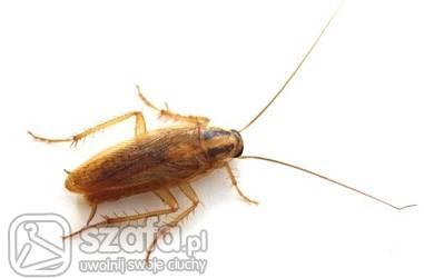 Uwolnij robaka