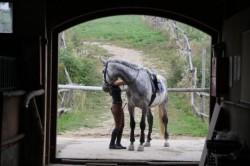 Zdrowie poprzez jazdę konną.