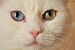 koty, koty, koty...