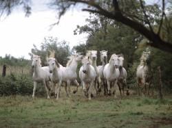Najpopularniejsze rasy koni :)