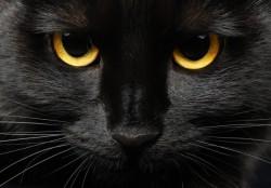 Ja czarny kot, ja wściekły pies, ja chwast...