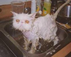 Kąpiel rozjaśniająca i co z niej wynikło