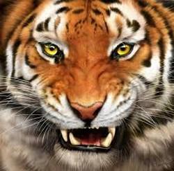 Tygrys wtargnął na zamek