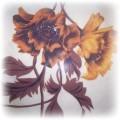 w kwiaty pomarańczowo brązowa