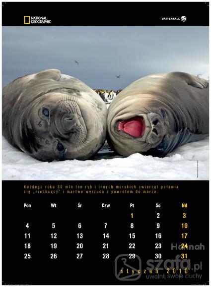 Pozostałe Kalendarz ścienny National Geographic 2010