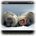 Kalendarz ścienny National Geographic 2010