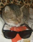 moje okulary i moj kochany kocurek
