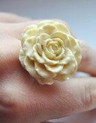 Róża pierścionek kremowy