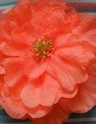 śliczny kwiat H&M