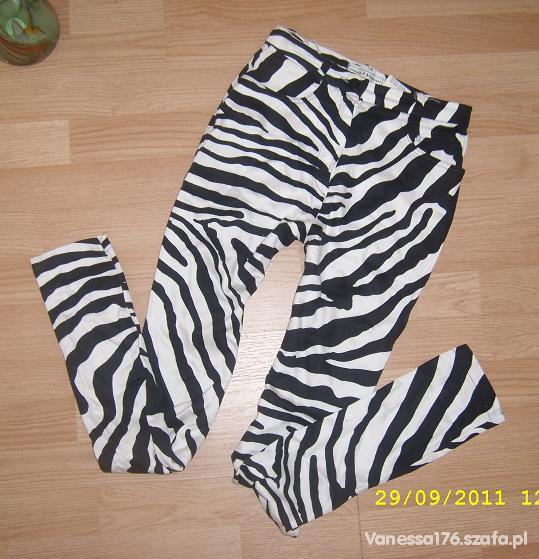 legginsy spodnie zebra