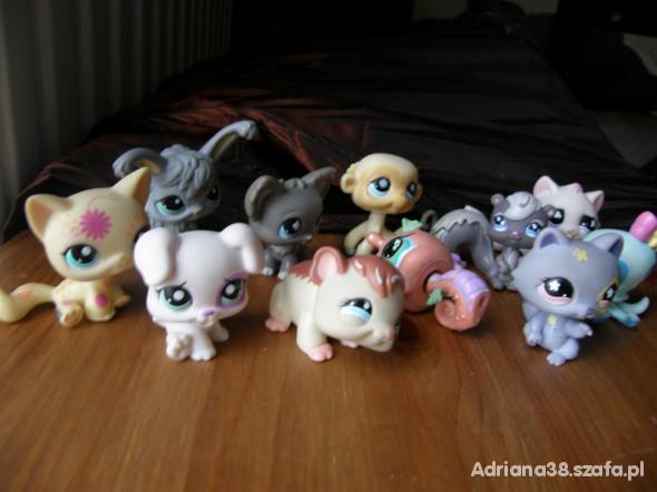Zabawki PETs