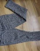 spodnie w panterke z zameczkam9