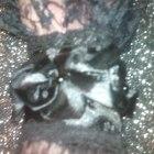 koronkowe rękawki