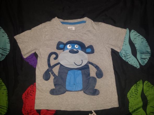 Koszulki, podkoszulki koszulka szara z małpką