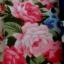 Kwiecista tunika bluzka