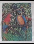 OBRAZ obrazek trójwymiarowy papugi 26 x 34 cm