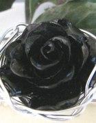 Koral róża metaloplastyka