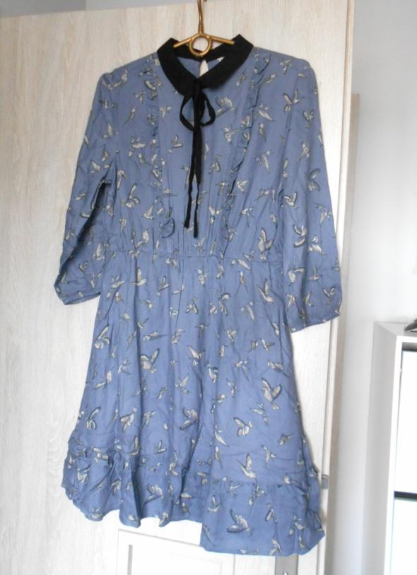 Suknie i sukienki CA sukienka wzory pensjonarka kołnierzyk ptaszki