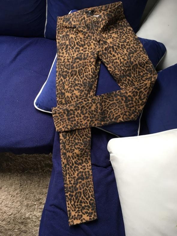 spodnie w panterkę
