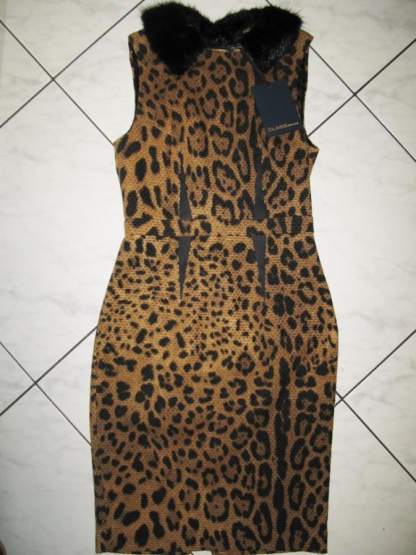 ROBERTO CAVALLI elegancka sukienka z kołnierzem w panterkę roz 36