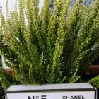 Perfum Chanel no 5