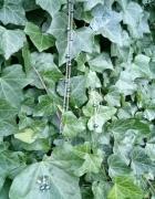 Srebrny komplet z zieloną perłą...