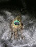 kolczyk pawie pióro