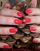 SHELLAC czerwone migdałki
