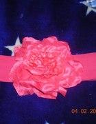 Różowy pas kwiat