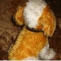 śliczny Reksio przytulanka mięciutki piesek