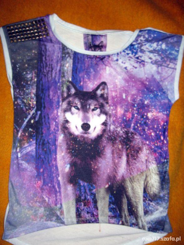 wilk wolf lupus wolk atmosphere...