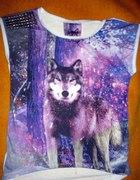 wilk wolf lupus wolk atmosphere
