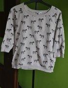 bluzeczka w zebry
