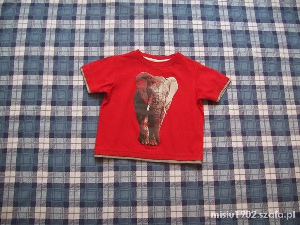 Koszulki, podkoszulki Tshirt 86 Świetny ze Słoniem dla Smyka 12 18 mcy