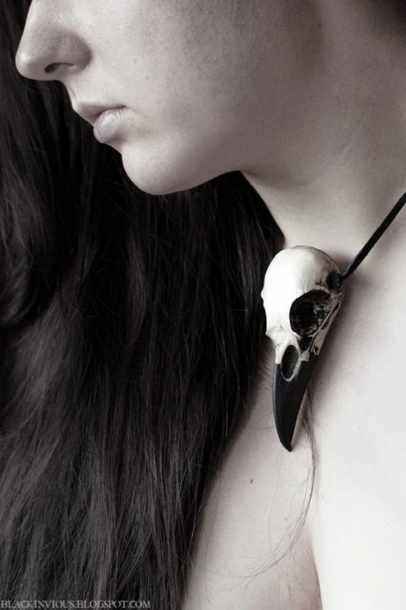 Czaszka kruka raven crow skull