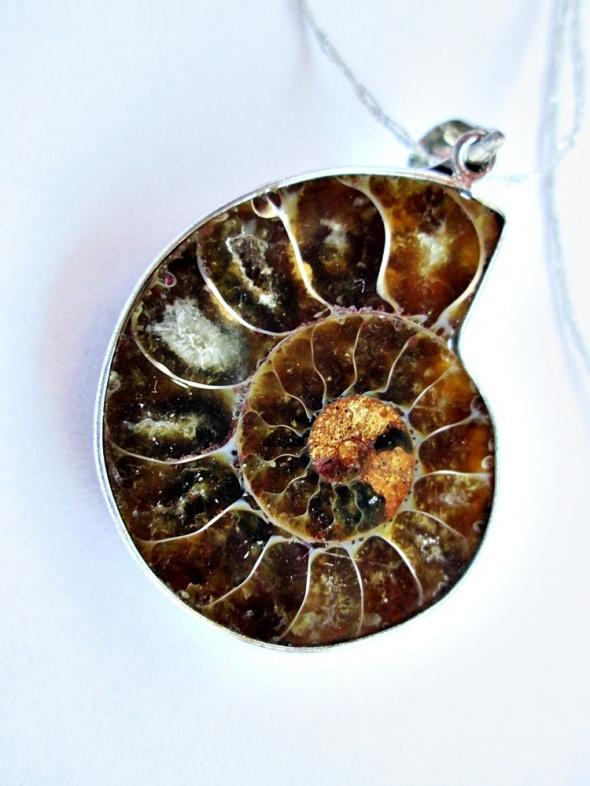 oryginalny amonit skamielina