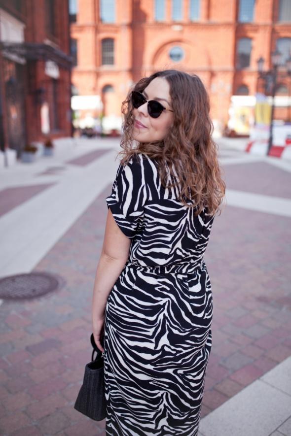 Blogerek zebra