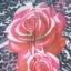 Bluzka w róże panterka różowe kwiaty M