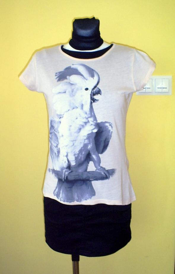 Łososiowa bluzka z papugą...