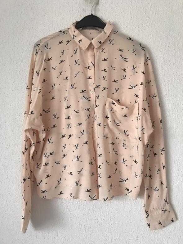 Koszula bluzka Zara w jaskółki S 36 łosowiowa z długim rękawem