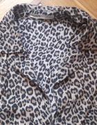 Koszula panterka Pull&Bear S